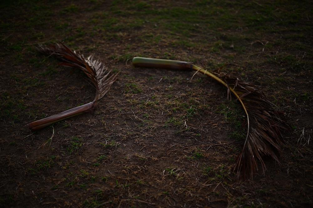 【画像】落ちた椰子の葉