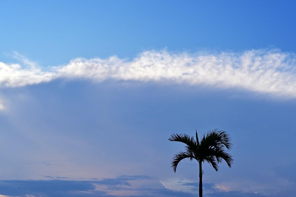 【画像】青空とヤシの木