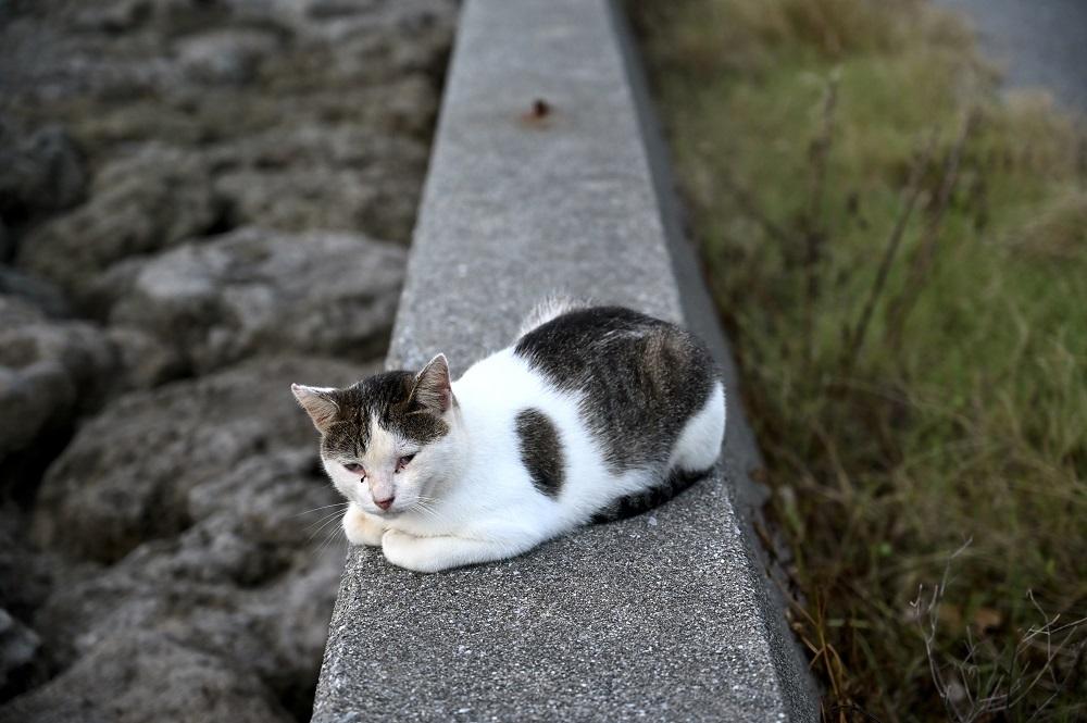【画像】沖縄の島猫